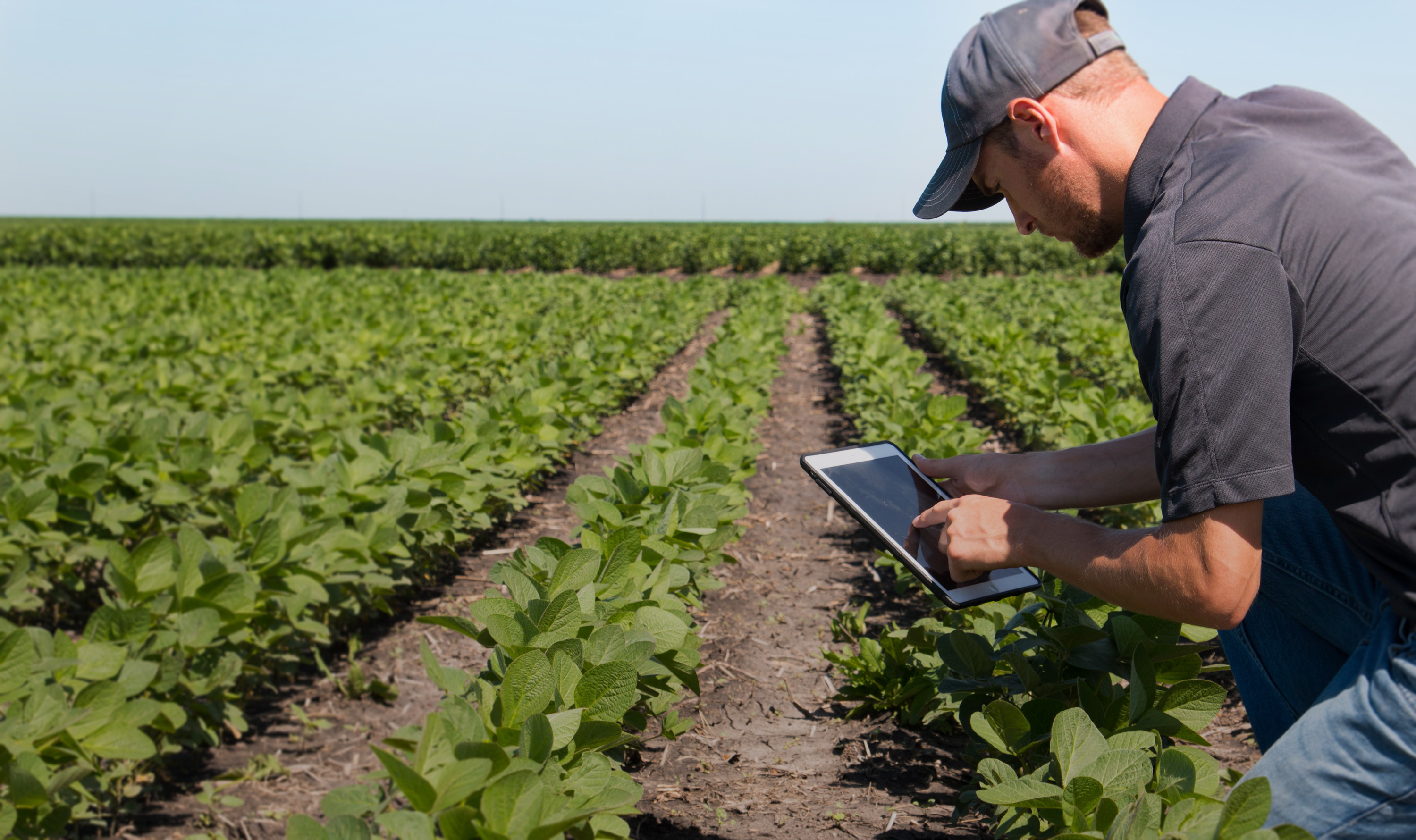A man uses an iPad while in a field of crops.